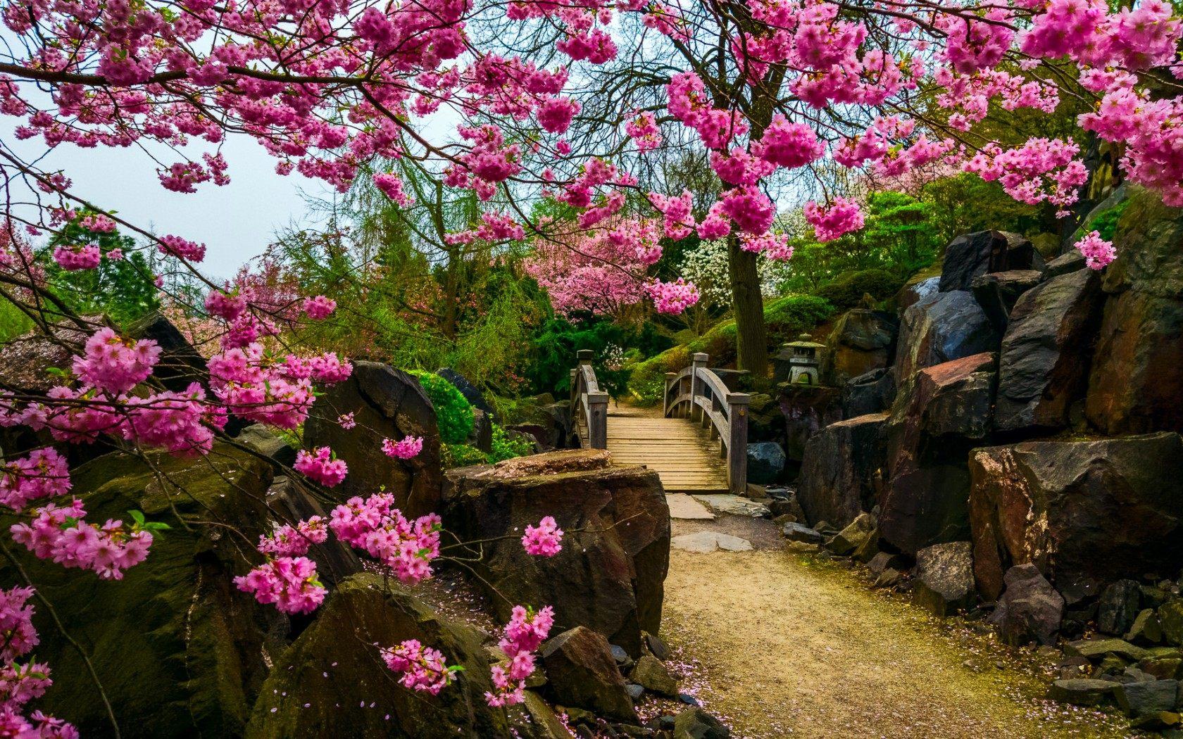 درخت با شکوفه