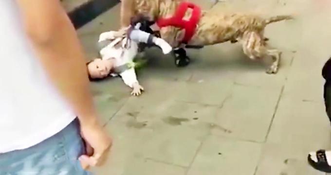 حمله غافلگیرانه سگ به پسربچهای در خیابان