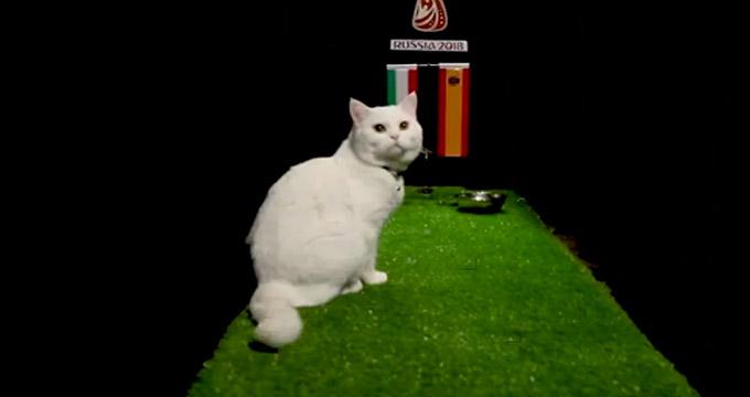 پیش بینی جالب بلوط گربه ورزش سه از بازی ایران - اسپانیا