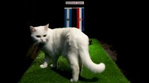 فیلم / پیش بینی بلوط گربه ورزش سه از بازی آرژانتین - کرواسی