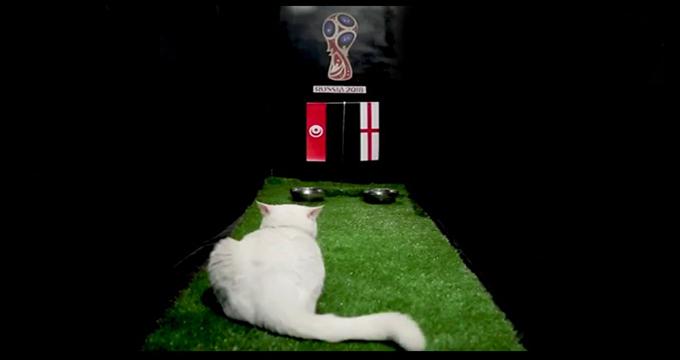 فیلم / پیش بینی بلوط گربه ورزش سه از بازی انگلیس - تونس