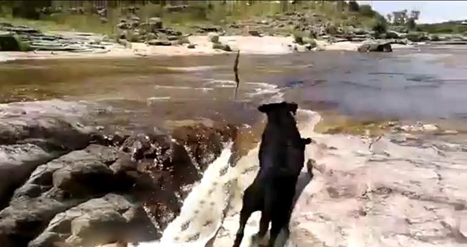 ویدئو/ نجات شجاعانه یک سگ توسط هم نوعش!