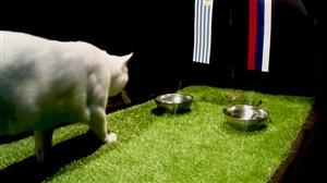 فیلم / پیش بینی بلوط گربه ورزش سه از بازی اروگوئه - روسیه