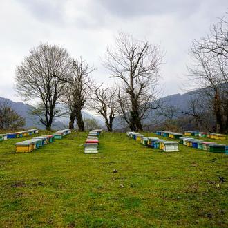 زنبورستان عسل آذربایجان