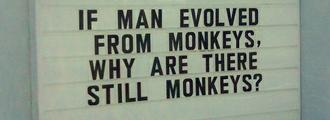 Human is not from Monkeys