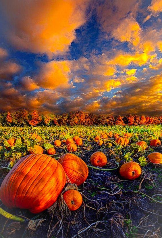 تصویر پاییز با کیفیت Full HD برای صفحه موبایل