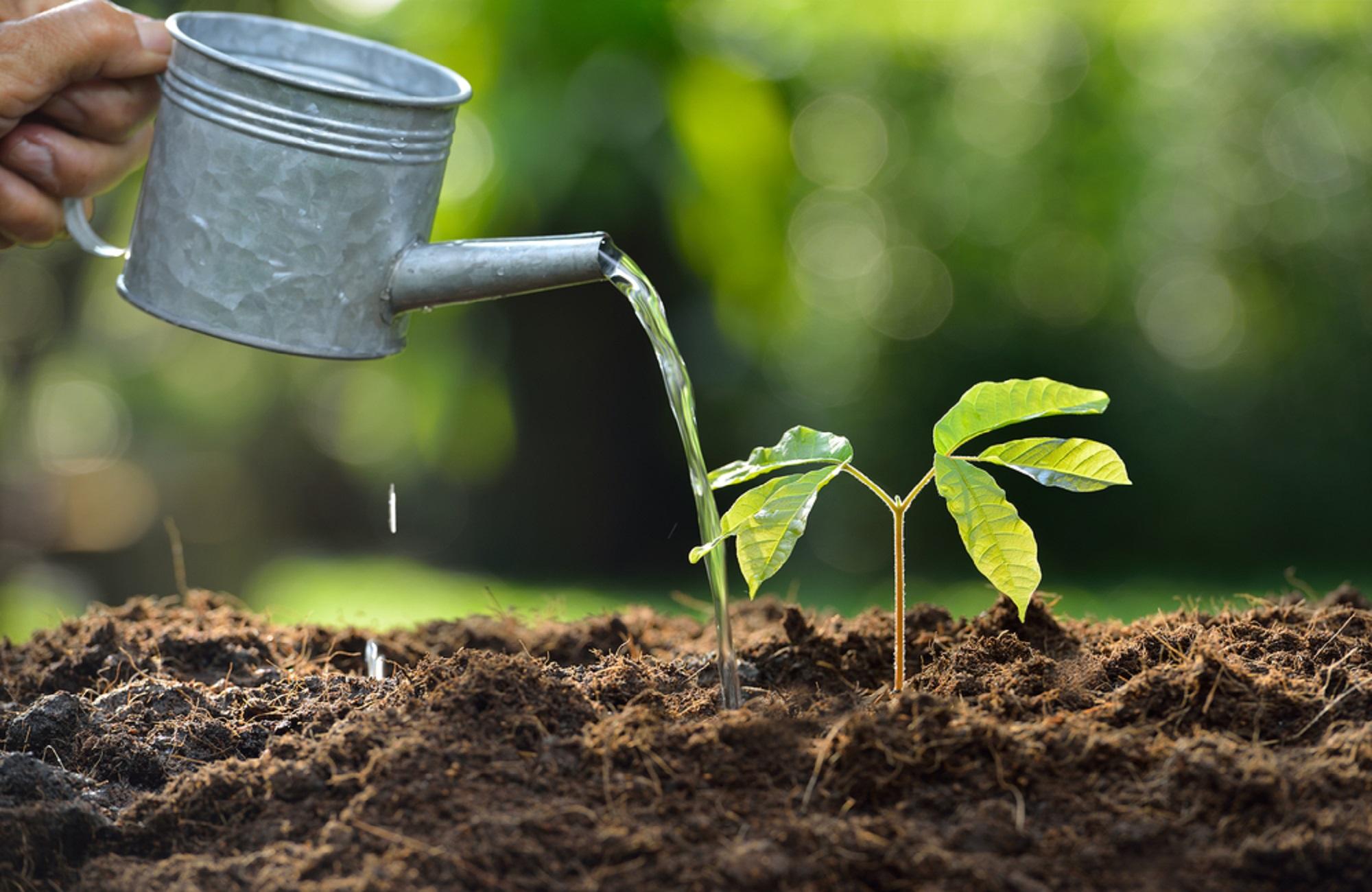 بهترین کود برای رشد سریع گیاهان