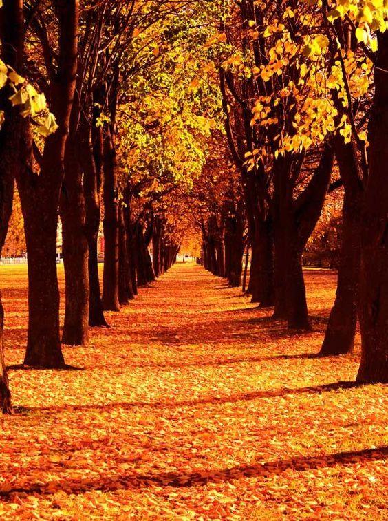 تصویر زمینه پاییزی برای موبایل با کیفیت عالی