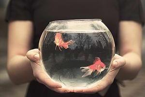 ماهی کوچک من