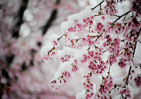 انشا ادبی درباره زمستان گذشت و بهار آمد