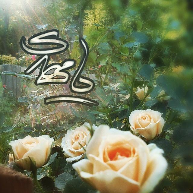 http://bayanbox.ir/view/1594405831984374250/mahdi-in-image-199.jpg