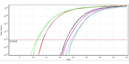 اصول و کلیات روش Real Time PCR