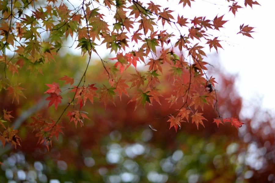 عکس درختان پاییز برای پس زمینه کامپیوتر