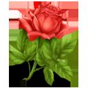 http://bayanbox.ir/view/1856897410585020215/rose.png