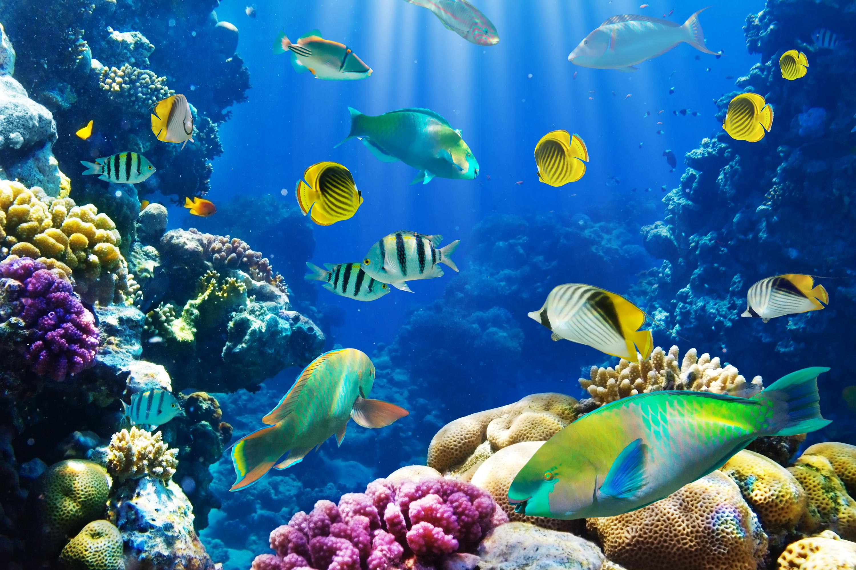 underwater_coral_ocean_reef_fish_tropical_hd-wallpaper ...