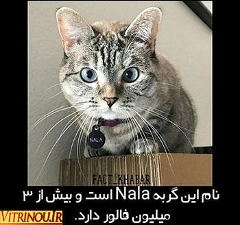 گربه نالا،نالا،گربه،NALA CAT،گربه ای بیش از3میلیون فالوور دارد رابشناسید،اخبارجالب،اخبارداغ فضای مجازی،همه چیزدرباره گربه نالا،اخبار فضای مجازی،گربه نالاعکس،عکس ازنالا،عکس ازگربه،اینستاگرام گربه نالا