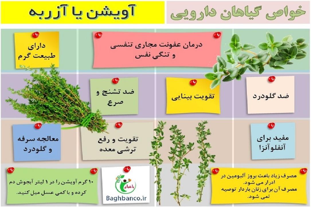 معرفی گیاه دارویی آویشن