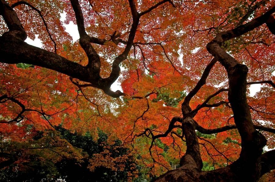 عکس پاییز زیبا با کیفیت HD برای کامپیوتر