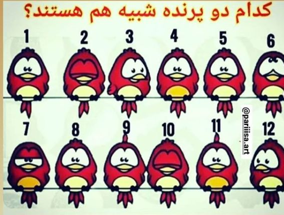 جواب معمای کدام دو پرنده شبیه هم هستند؟