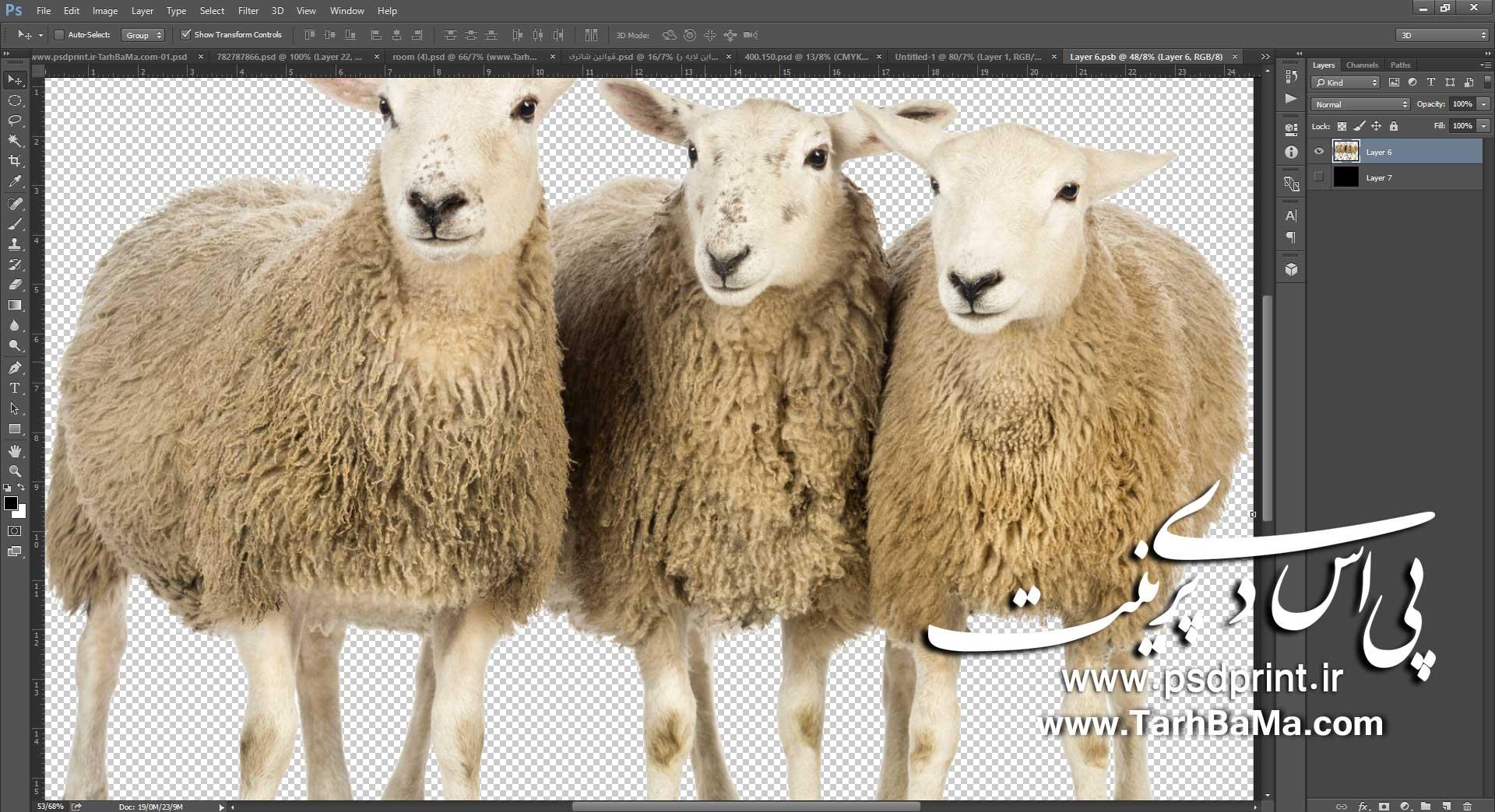 شاتر استوک گوسفند