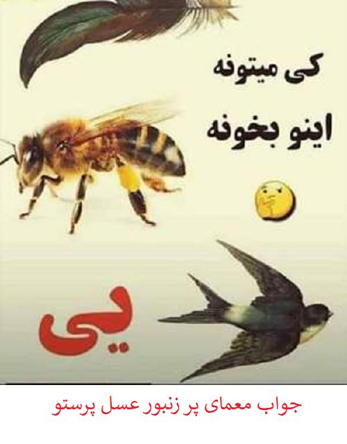 جواب معمای پر زنبور عسل پرستو