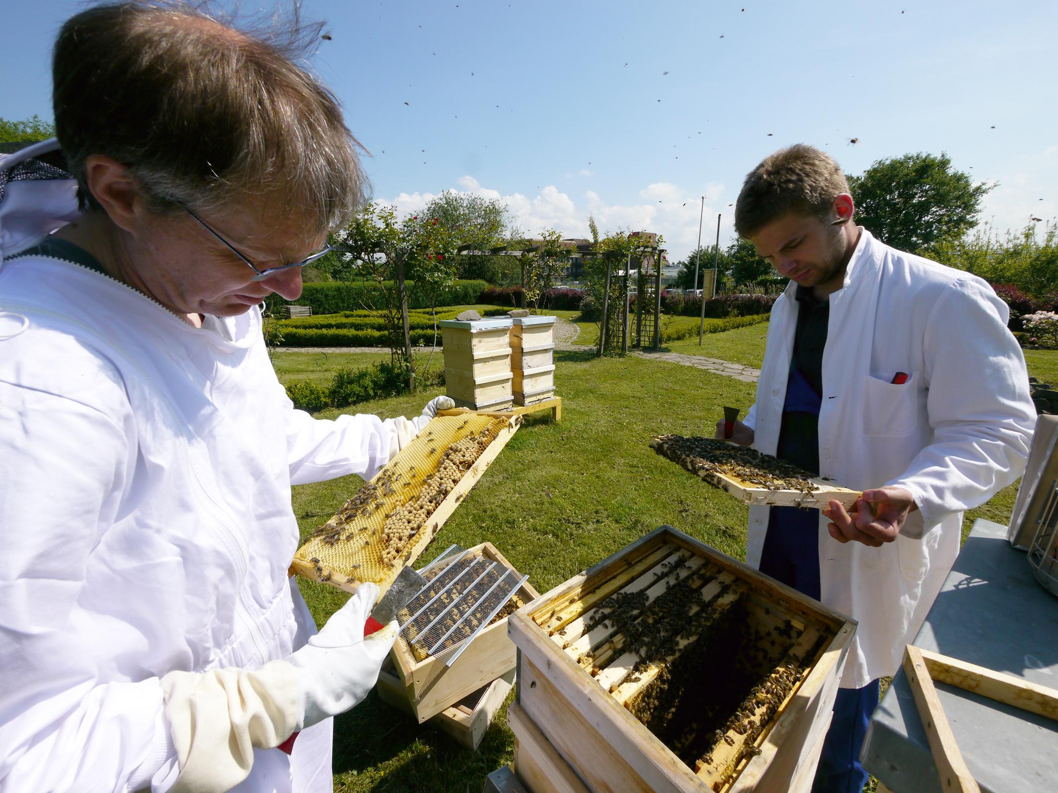 """قیمت کندو عسل سال 95 تولید عسل """"بدون دخالت زنبور """"در کشور از زبان رییس صنوف ..."""