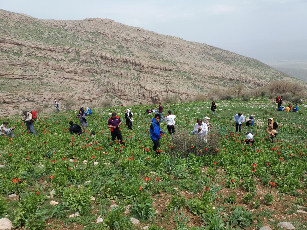 گروه کوهنوردی هیئت کوهنوردی دورود