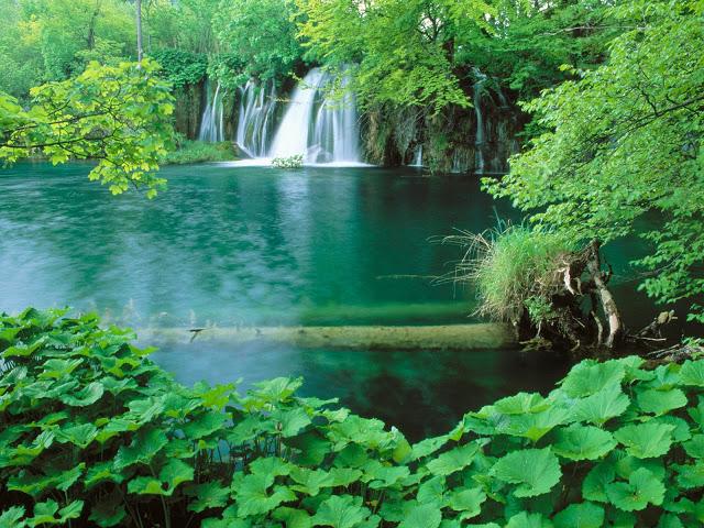 رنگ سبز نشانه آرامش