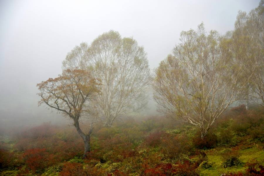 عکس پس زمینه پاییزی با کیفیت بالا برای کامپیوتر