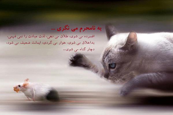 نگاه حرام