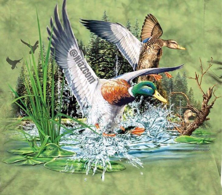 جواب معمای در تصویر بالا چند اردک میبینید