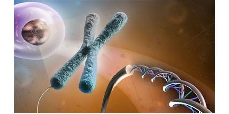 تلومراز و مهار آن در سرطان