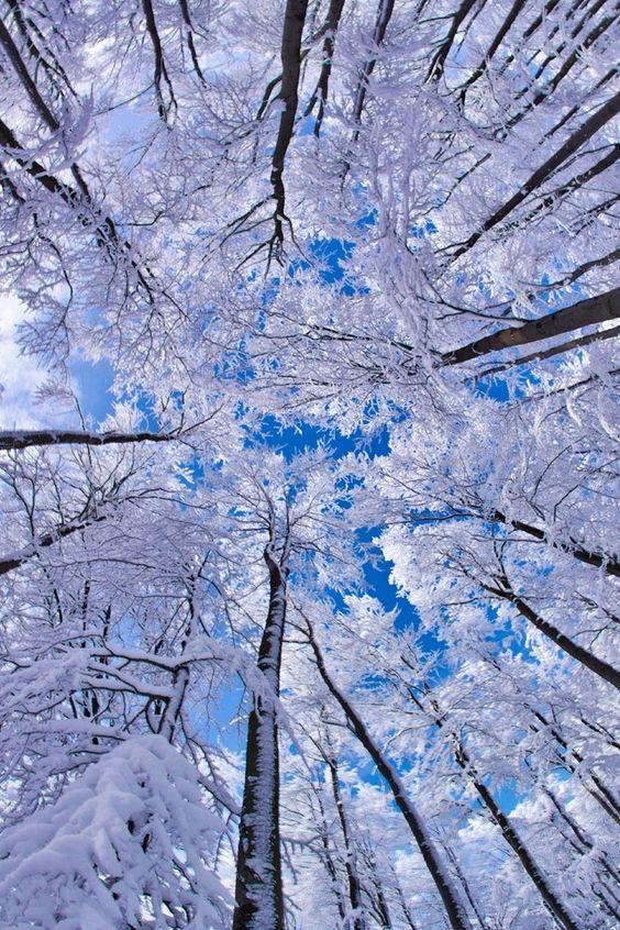 تصویر پس زمینه زمستانی برای صفحه موبایل