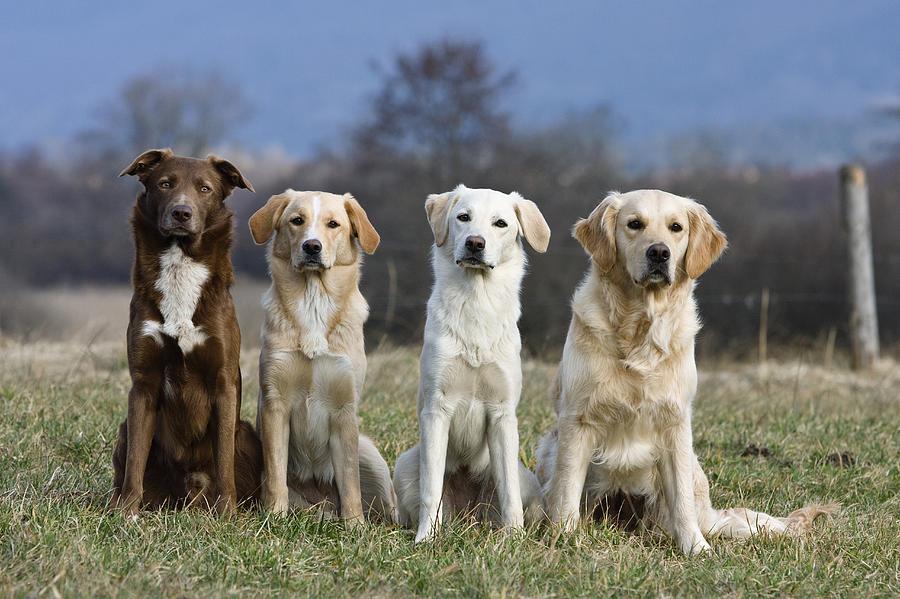 تحلیل DNA باستانی نشان از منشا دوگانه ی سگ های اهلی دارد
