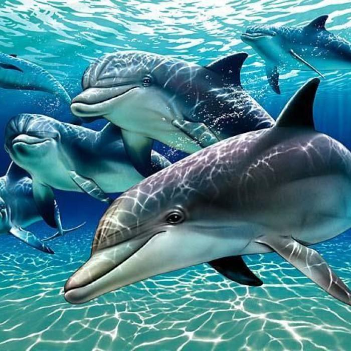 آوای شفابخش دلفین
