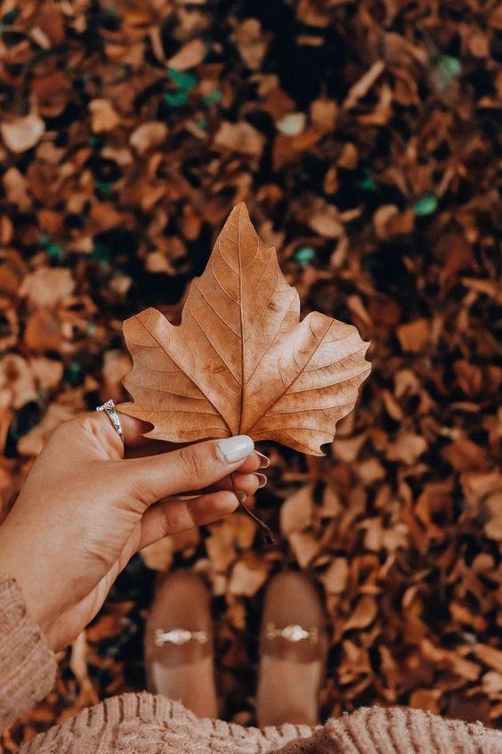 پس زمینه زیبای پاییزی برای گوشی موبایل