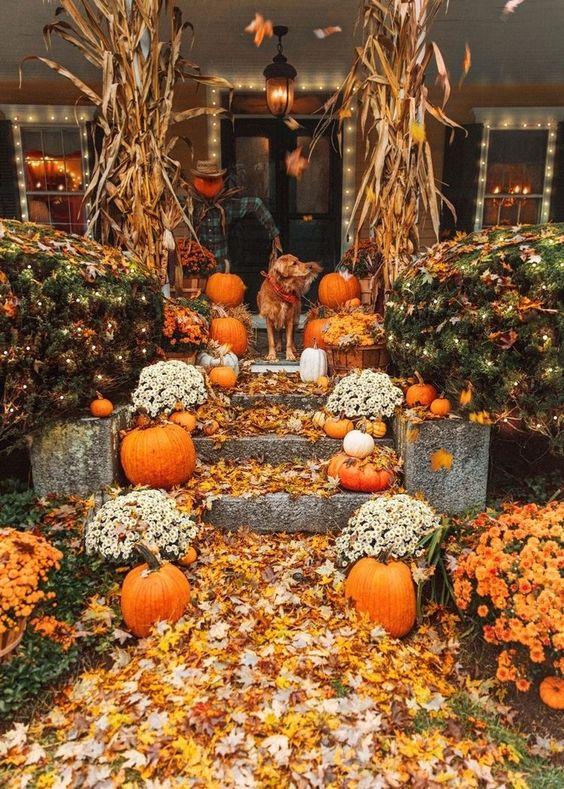 والپیپر زیبای پاییزی برای موبایل با کیفیت بالا