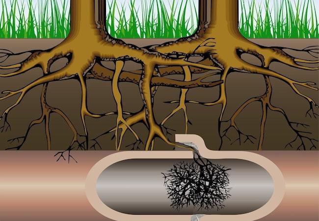 ترکیدگی لوله بر اثر فشار ریشه درختان