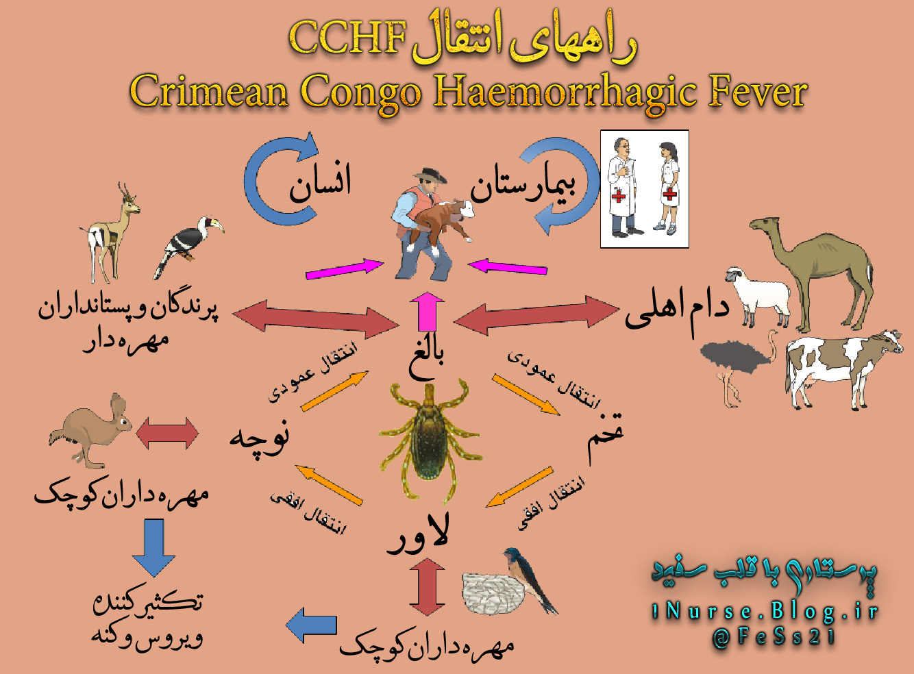 چرخه CCHF