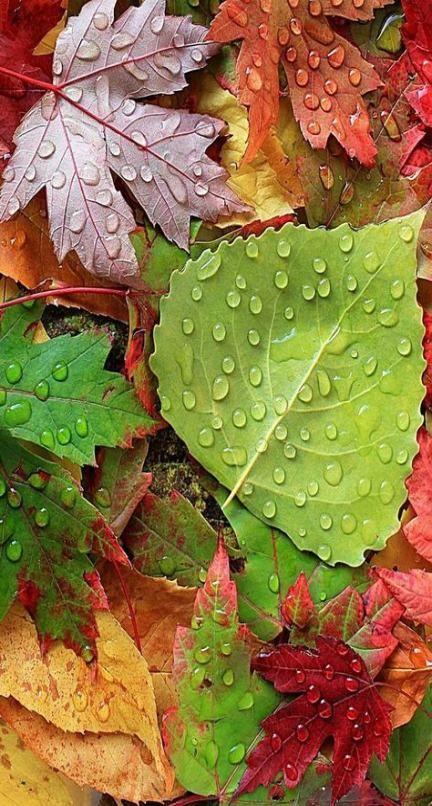بک گراند برگ های خوش رنگ پاییزی برای موبایل
