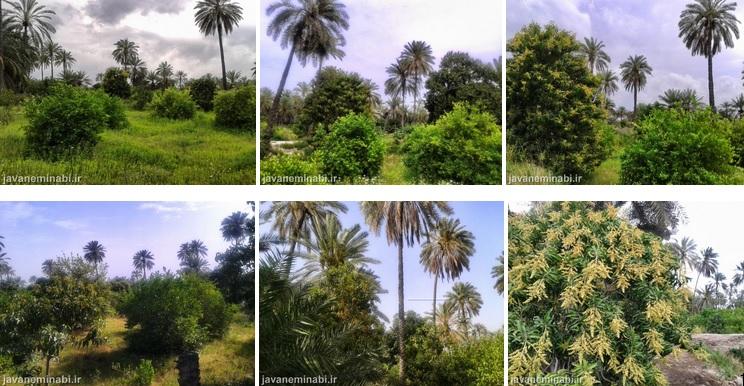 باغ میناب