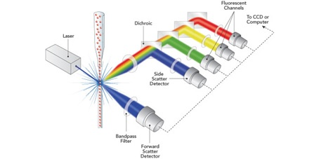 درباره تکنیک فلوسایتومتری Flowcytometry