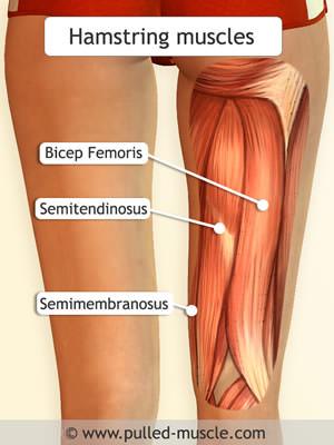 آسیب همسترینگ hamstering injury