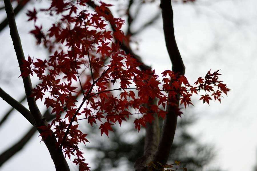 عکس درختان پاییزی زیبا برای صفحه کامپیوتر