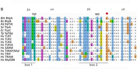 نحوه مقایسه همردیفی (Alignment) توالیهای پروتئین در قالب فرمت PDB
