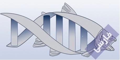 مقدمه ای بر بیوتکنولوژِی انتقال ژن در ماهی