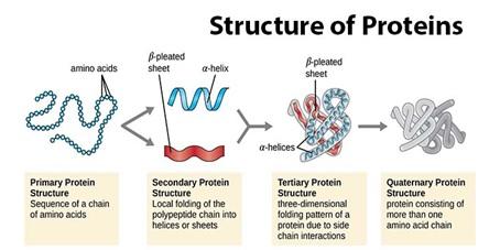 مقدمه ای بر ساختار پروتئین ها