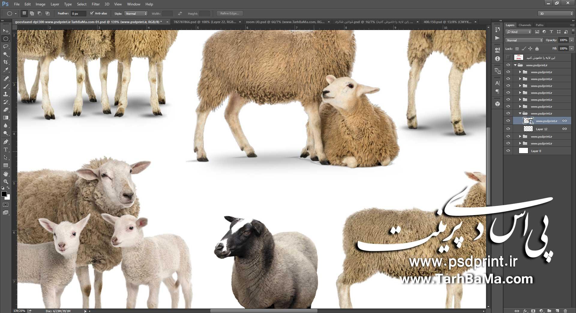 گوسفند png