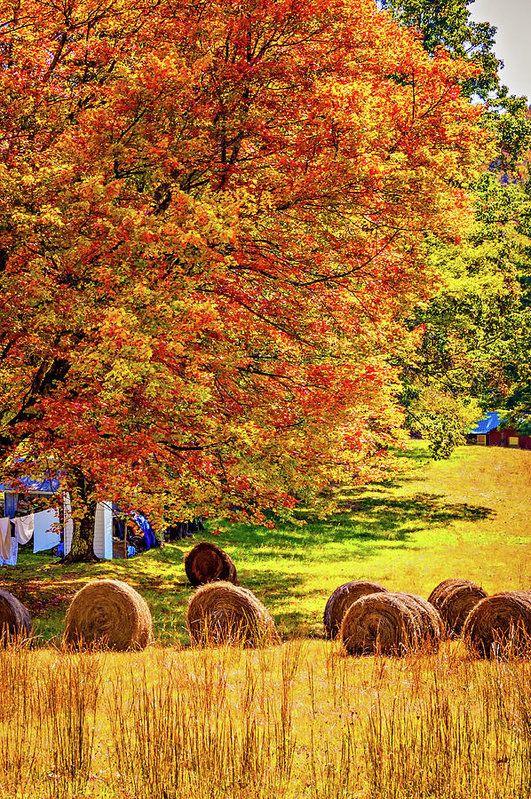 تصاویر با کیفیت از فصل پاییز برای موبایل