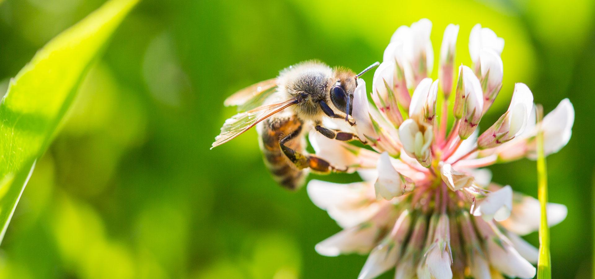 آموزش گام به گام پرورش زنبور عسل